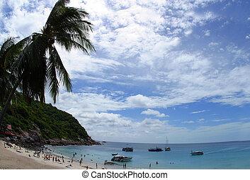 完全, koh, 平穏, トロピカル, paradis, 穏やかである, tao, 浜