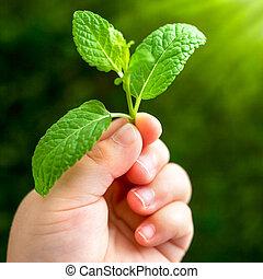 宏, leaf., 向上, 手 藏品, 嬰儿, 關閉