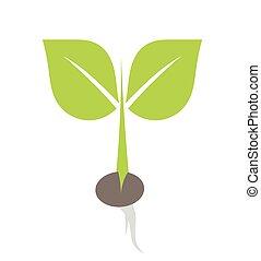実生植物, 植物