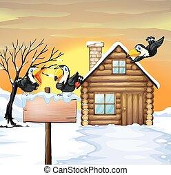 家丸太, toucans, 冬, 雪