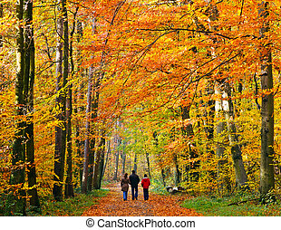 家庭走, 通过, 秋季, 公园