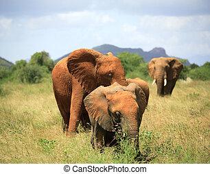 家族, の, 象