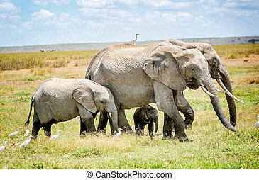 家族, の, 象, 中に, kenya, アフリカ
