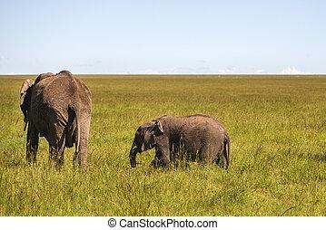 家族, の, 象, 中に, kenya, アフリカ, serengeti, 自然, 公園