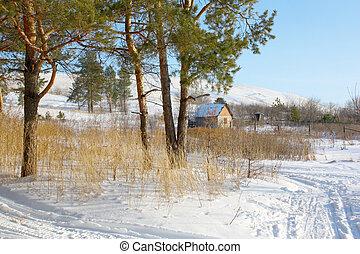 家, 冬, 森林