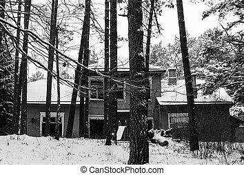 家, 古い, 森林