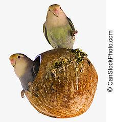 家, 巣, 鳥