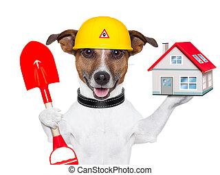 家, 建築者, 犬