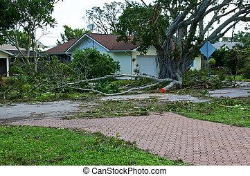 家, 後で, ハリケーン, 木, 壊される