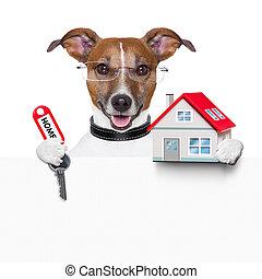 家, 旗幟, 狗, 鑰匙