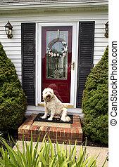 家, 歓迎, (dog)
