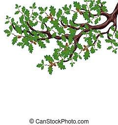 容積測定, gradient., オーク・ツリー, 隔離された, イラスト, 大きい, バックグラウンド。, なしで, 緑, ブランチ, acorns., 白, 図画, 噛み合いなさい