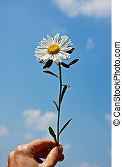 寄付, 花
