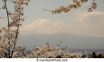 富士, 山, 春天