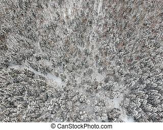 寒い, 雪で覆われている, 冬, 日, 森林