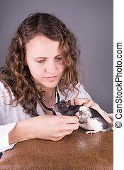 實驗室, 老鼠, 動物, 研究
