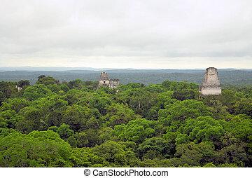 寺院, mayan, guatemala, 森林, の上, tikal
