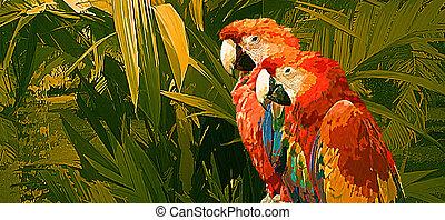 対, オウム, macaw