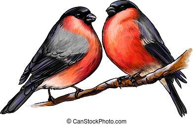 対, 引かれる, 冬, 鳥, bullfinches, 背景, 美しい, 白, スケッチ, 手