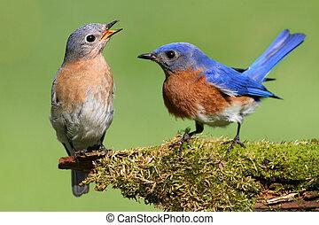 対, bluebird, 東