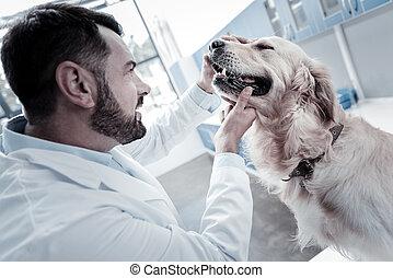 專業人員, 聰明, 人, 檢查, 狗, 健康