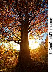 尊嚴, 山毛櫸屬樹, 由于, 陽光普照, 梁