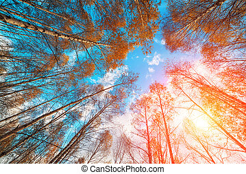 尊嚴, 樺樹樹, 由于, a, 混濁的天空