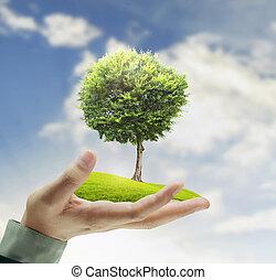 小さい木, 手