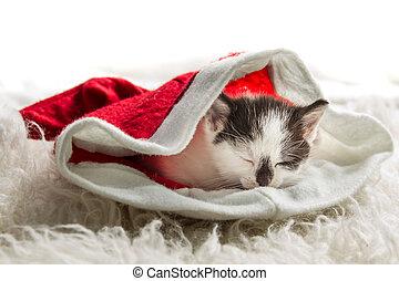 小さい, クリスマスの ギフト, 子ネコ