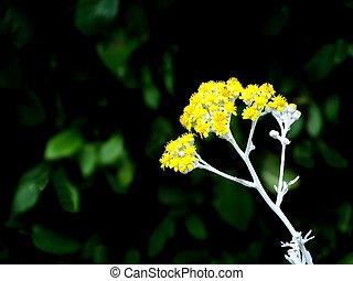 小さい, ライト, 花, 光線, 黄色