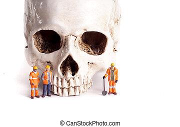 小さい, 労働者, 頭骨