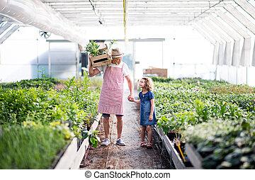 小さい, 女の子, 祖父, greenhouse., シニア, 園芸