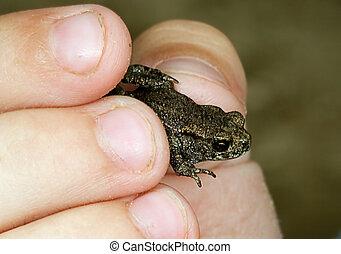 小さい, 手, カエル, 子供