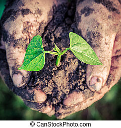 小さい, 植物, 中に, 手