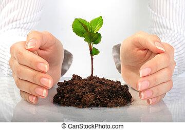 小さい, 植物, 中に, hands.