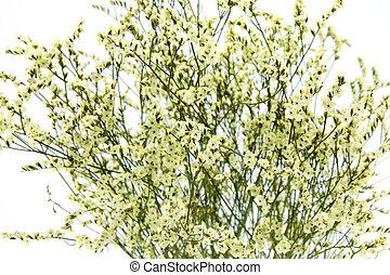 小さい, 白い花, 背景, 黄色
