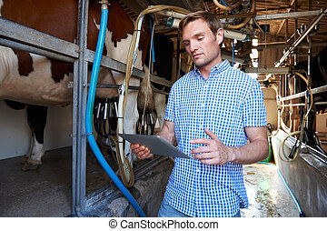 小屋, タブレット, 農夫, 搾乳場, デジタル, 搾り出すこと, 使うこと