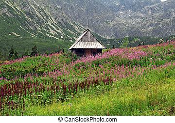 小屋, 山, tatra, ポーランド