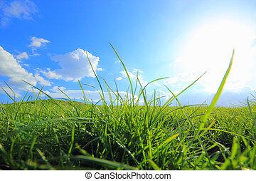 小山, 太陽, 綠色, 在下面, 草, 正午