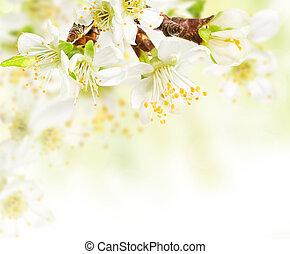 小枝, 春, 花