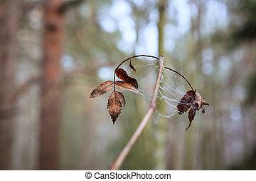 小枝, 森林