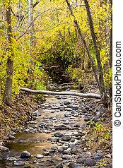 小溪, 在, 酒, 綠色, 荒野