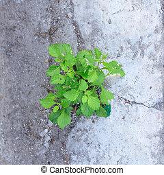小的樹, 生長, 在之間, 對照, 街道。