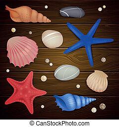 小石, ベクトル, starfishes, 貝殻