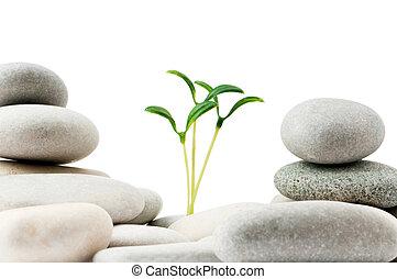 小石, 概念, -, 実生植物, 薬, 選択肢