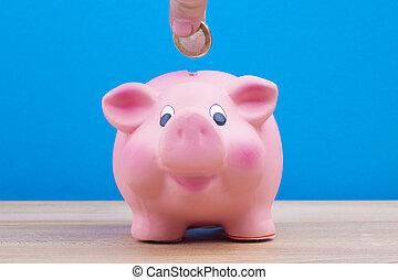 小豚, セービング, 銀行, 引退