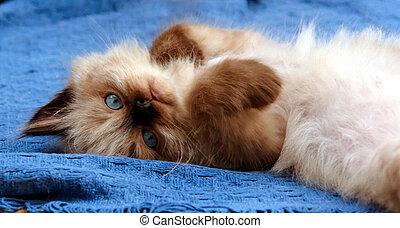 小貓, 躺在后面上