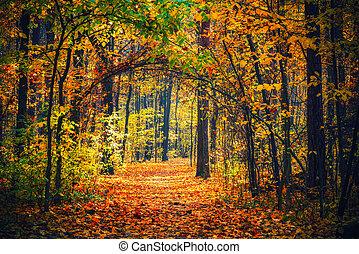 小道, 森林, 秋