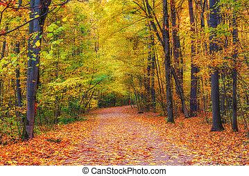 小道, 秋の森林