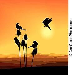 小鸟, 在上, a, 蓟